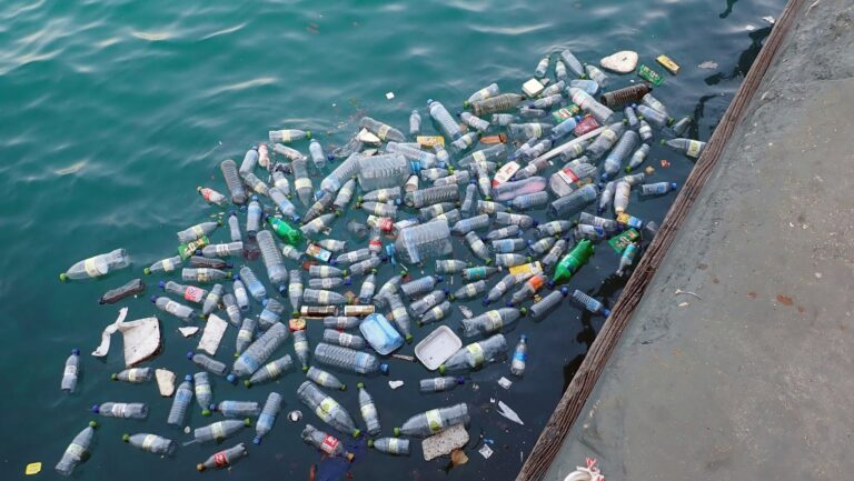 hundreds of plastic bottles in the ocean, close to the edge of what looks like a a jetty